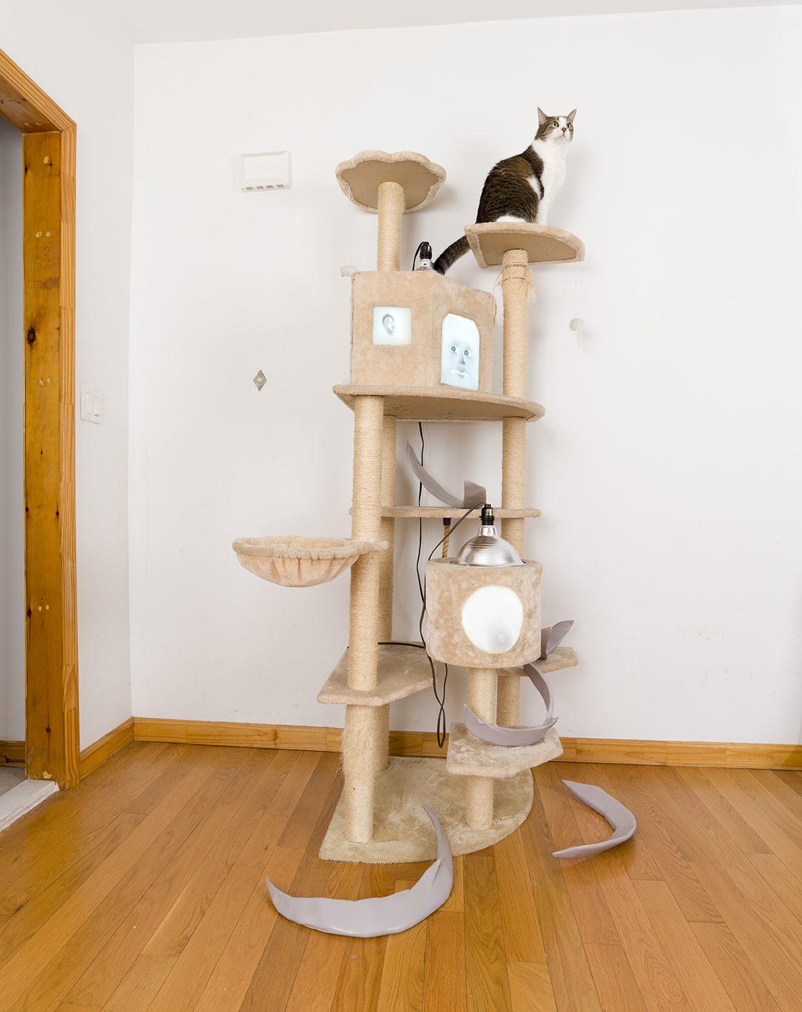 ung5 x Catbox Contemporary